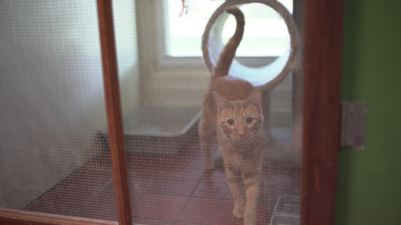cat_DSC01490.JPG