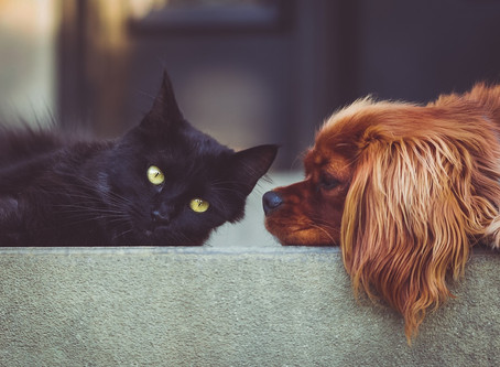 What to Do When Your Pet Won't Eat!