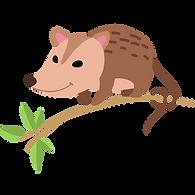 possum (1).png