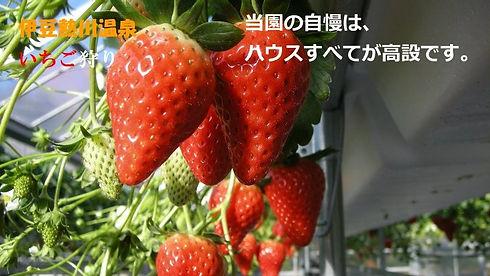 ストロベリーファーム太田農園.jpg