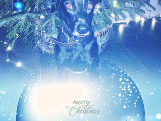 Wir wünschen Frohe und besinnliche Weihnachten