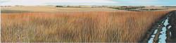 """Encroachment, Allwine Prairie"""