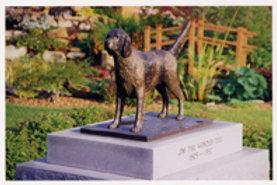 Jim the Wonder Dog Postcard