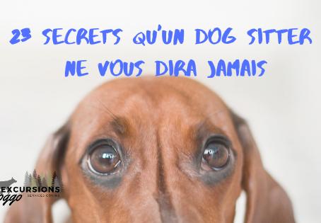 23 secrets qu'un employé d'une garderie pour chien ne vous dira jamais.