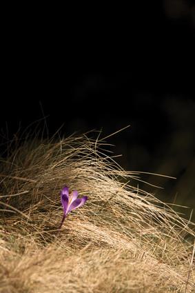 7-Fleur-printemps.jpg