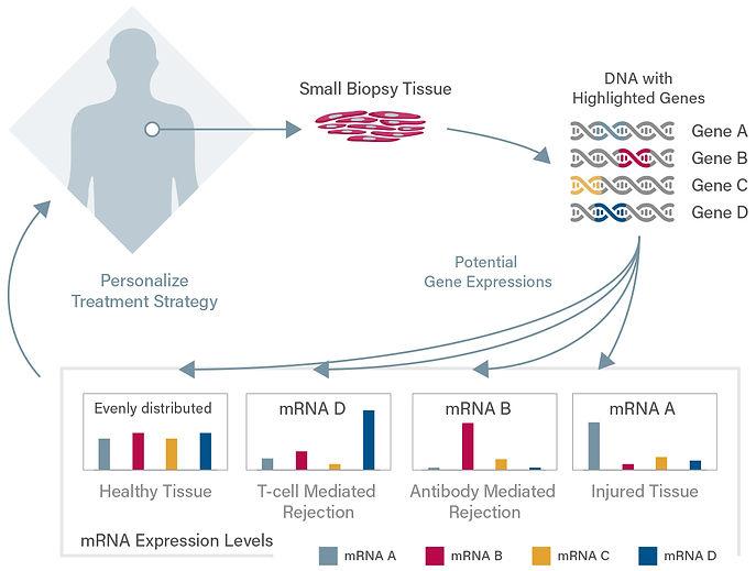 infographic-mRNA5.jpg