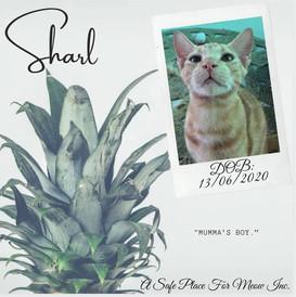 Sharl