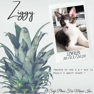 Ziggy (Bonded with Stormy)