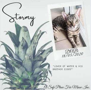 Stormy (Bonded with Ziggy)