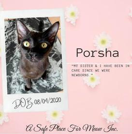 Porsha (Bonded with Mercedes)