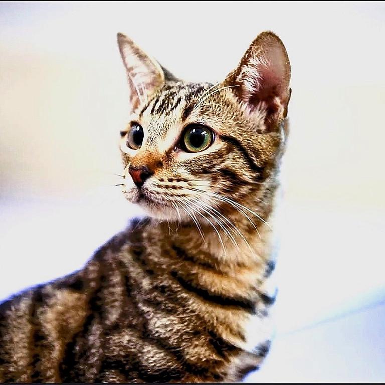 Cat-Pacity Adoption Day