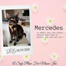 Mercedes (Bonded with Porsha)