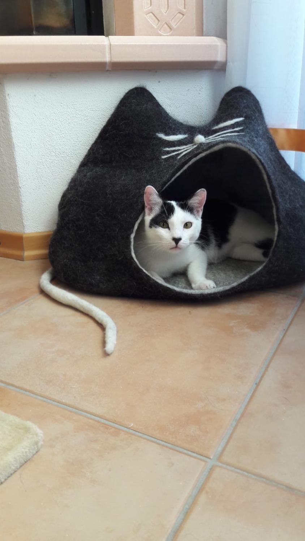 Katzenhöhle PEPE
