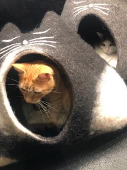 Höhlentester-Kollegen