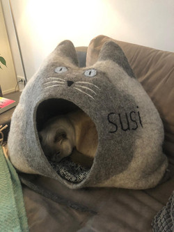 Susi's home