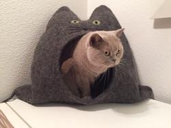Britisch Kurzhaar in Katzenhöhle Rud