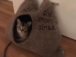 Simba bewohnt ein Mehrfamilienhaus