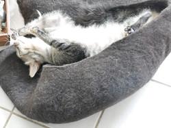 Wellness für die Katzenseele