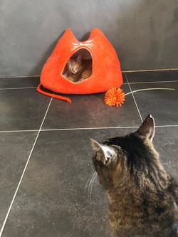 Katzenhöhle ORANGE
