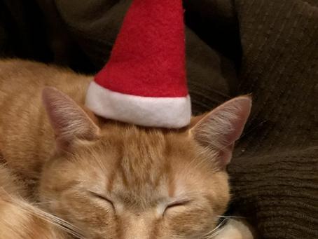 Schöne Weihnachten 🎄💫