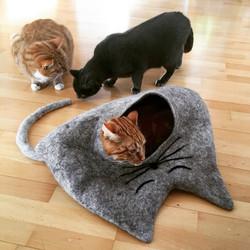 Katzenhöhle EDDIE