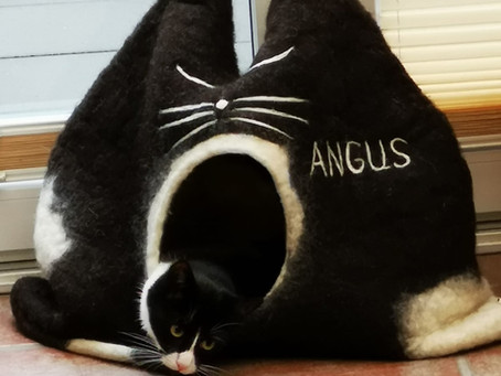 Schönen guten Morgen, Angus 🐾❤️