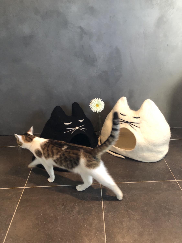 Katzenhöhlen BLACKIE und EMMA