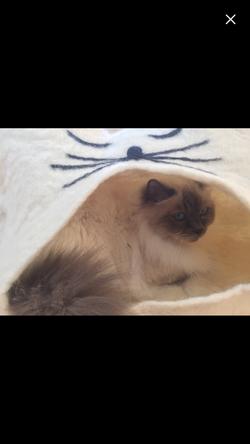 Katzenhöhle EMMA