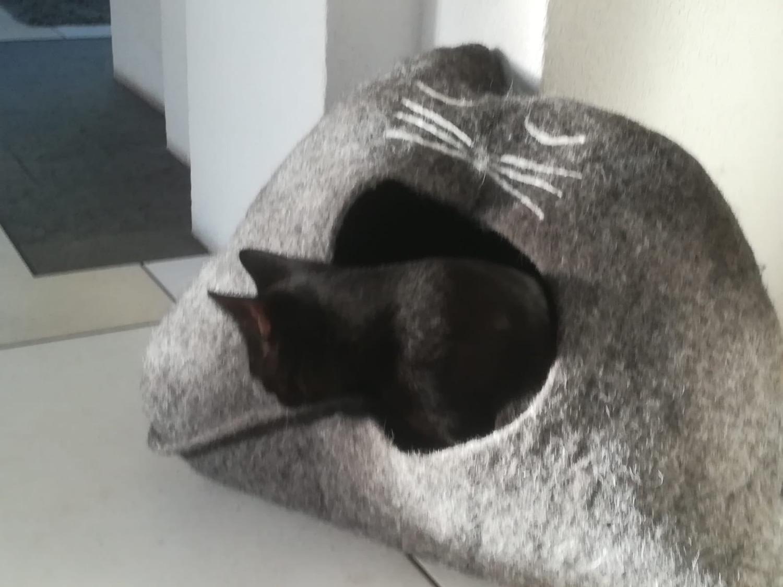 Isaac bezieht sein neues Haus