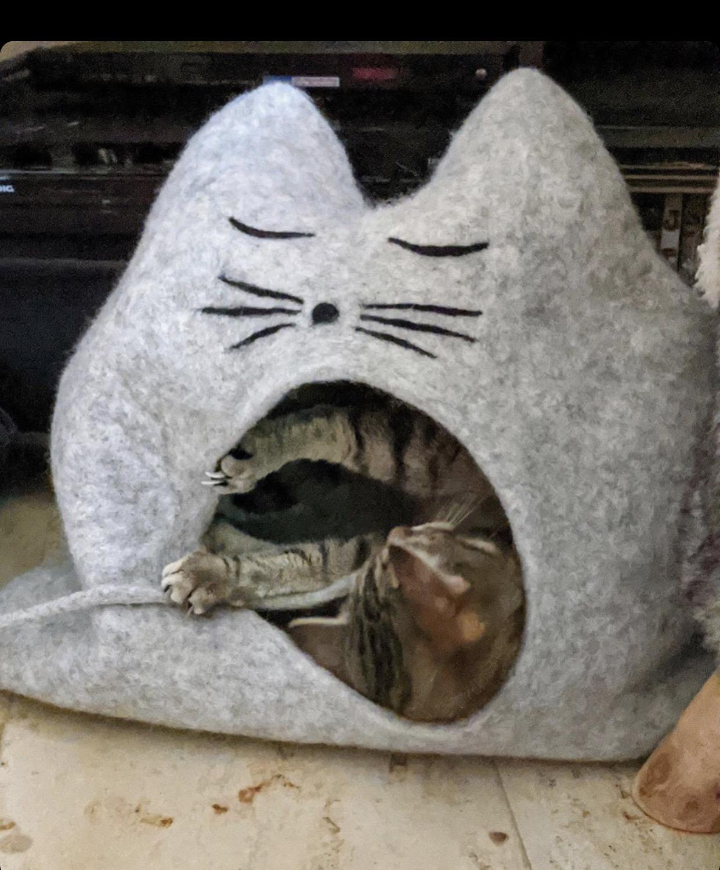 Tiger testet seine neue Höhle