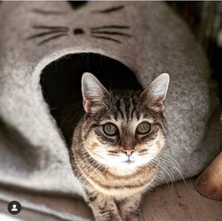 Geheimnisvolle Augen