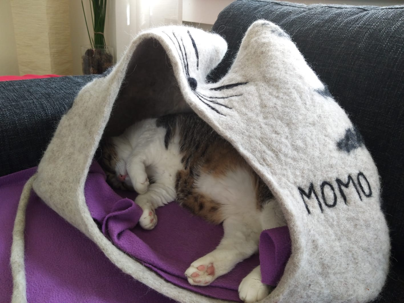Katzenhöhle TIGER