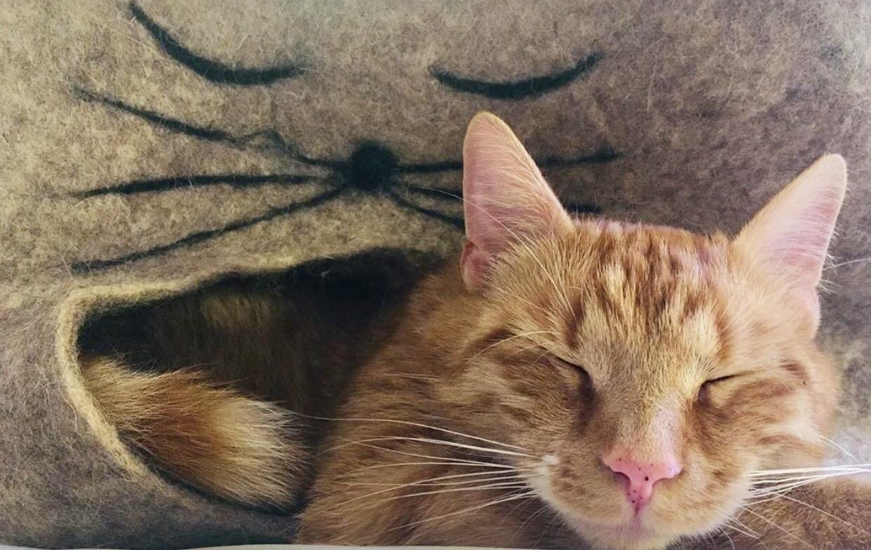 Anton in Katzenhöhle Eddie