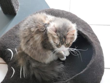 Im neuen Katzencabrio 🚘...
