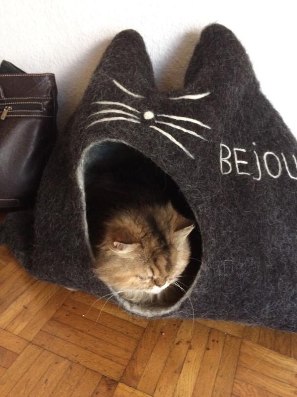 Bejou hat sich im neuen Haus schon eingelebt