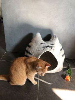Katzenhöhle TIGER mit Streifen