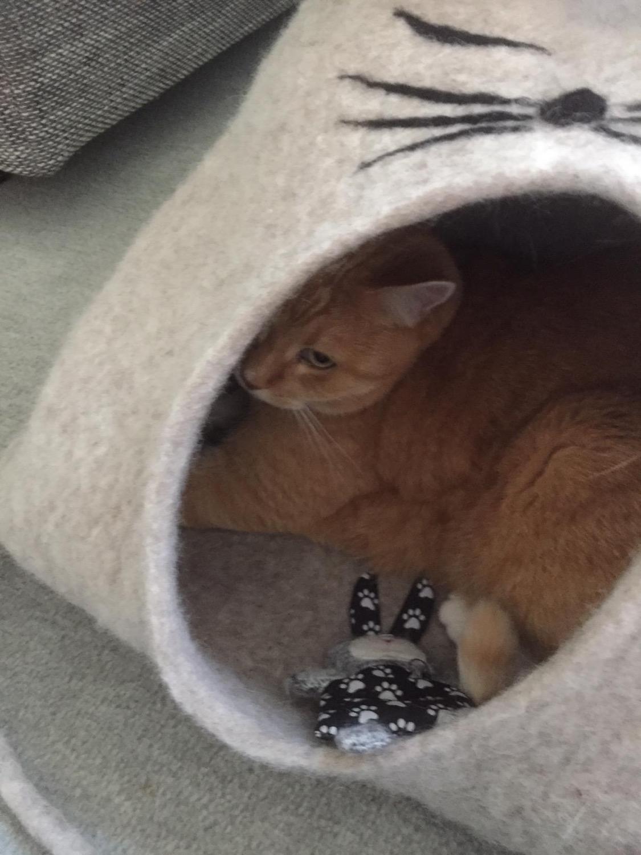 Socke mit Hasi in Katzenhöhle Eddie