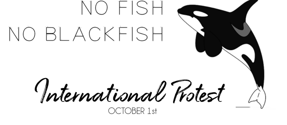 No Fish No Blackfish- It's Now Or Never