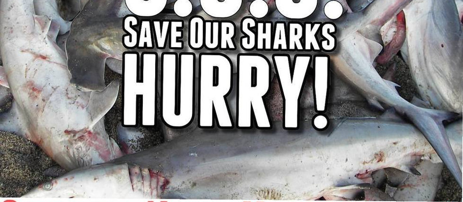 Sharks In The Atlantic Need You!