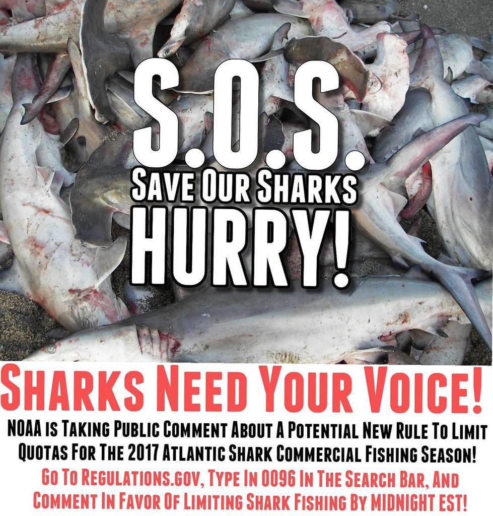 Keiko Conservation Sharks