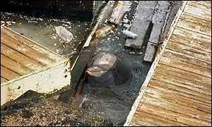 dolphin quest bermuda abandons in hurricane