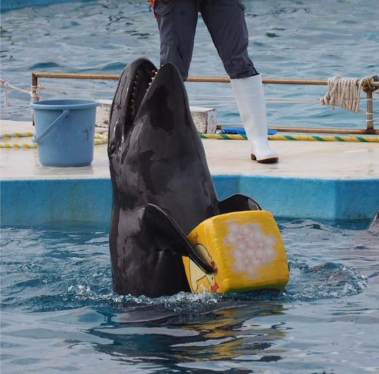 false killer whale captivity cruel