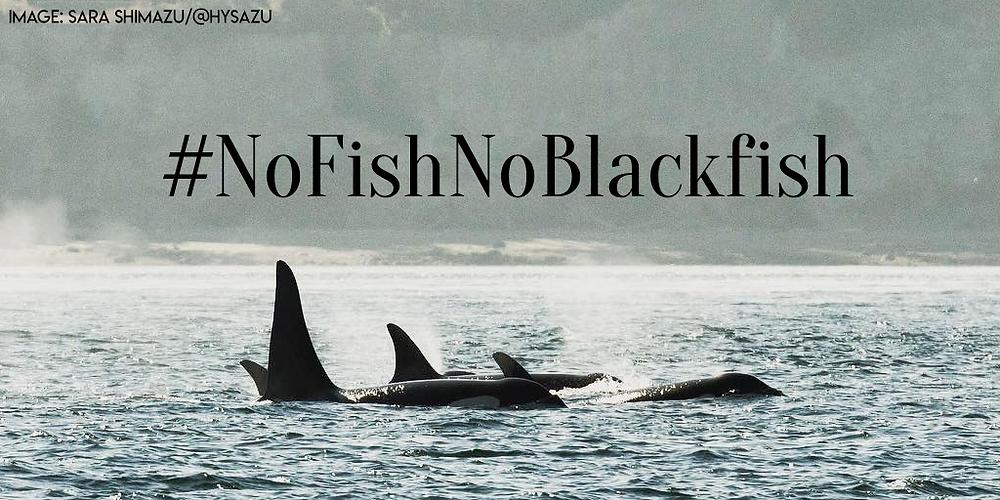 No Fish No Blackfish Southern Resident Orcas Sara Shimazu Keiko Conservation PNW Protectors