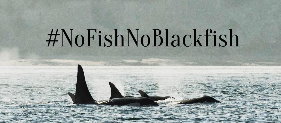 Tweet! #NoFishNoBlackfish