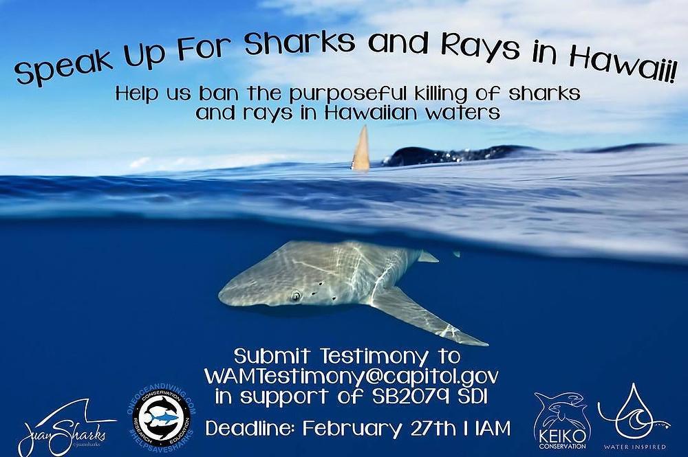 Keiko Conservation One Ocean Diving Shark Bill