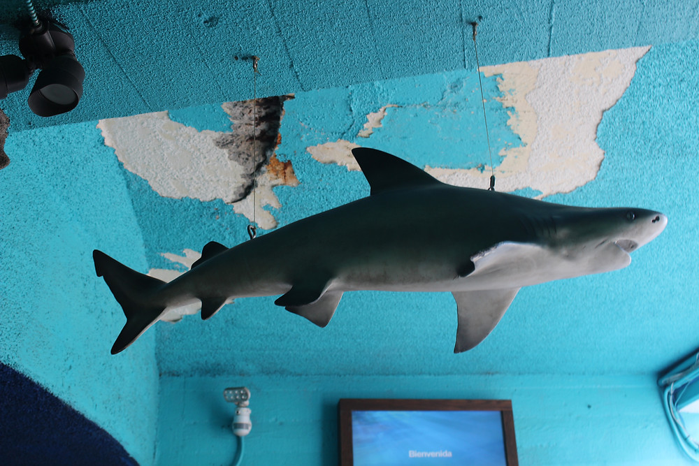 Sea Life Park Falling Apart Dangerous Animal Cruelty DLNR