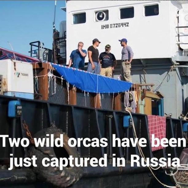 russia orca capture