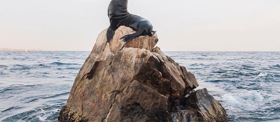 OCEAN ACTION: Dec. 12th- Stop The Sea Lion Cull