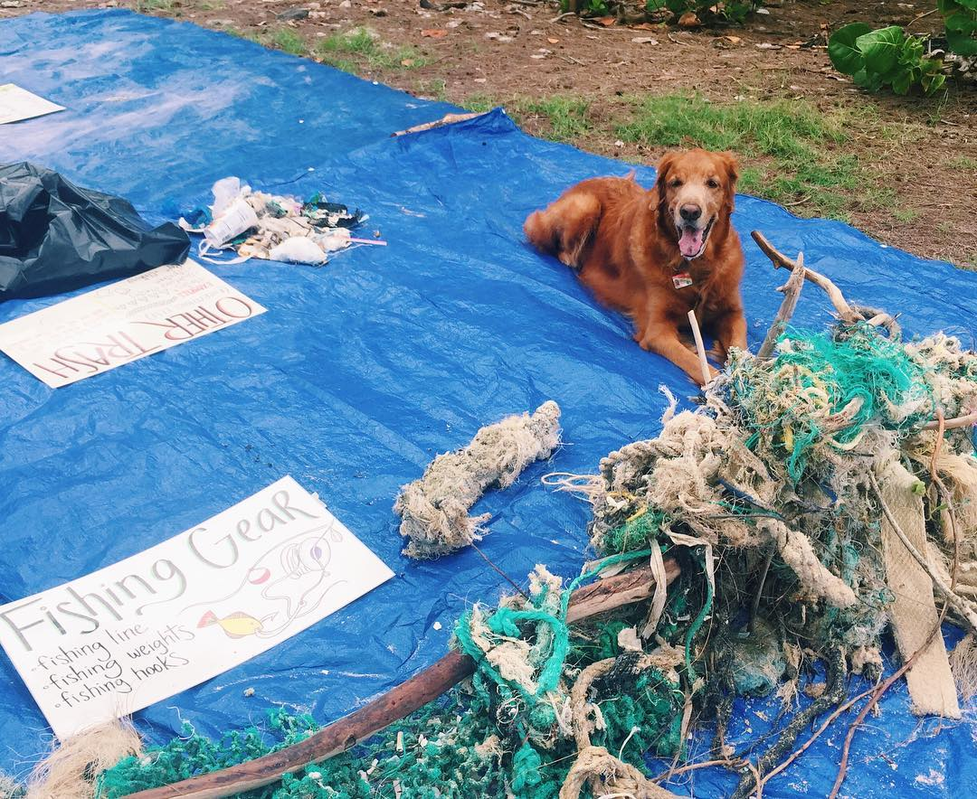 Charlie Kenna Cady keiko conservation one ocean conservation water inspired microplastics #nerdsagainstnurdles clean up oahu