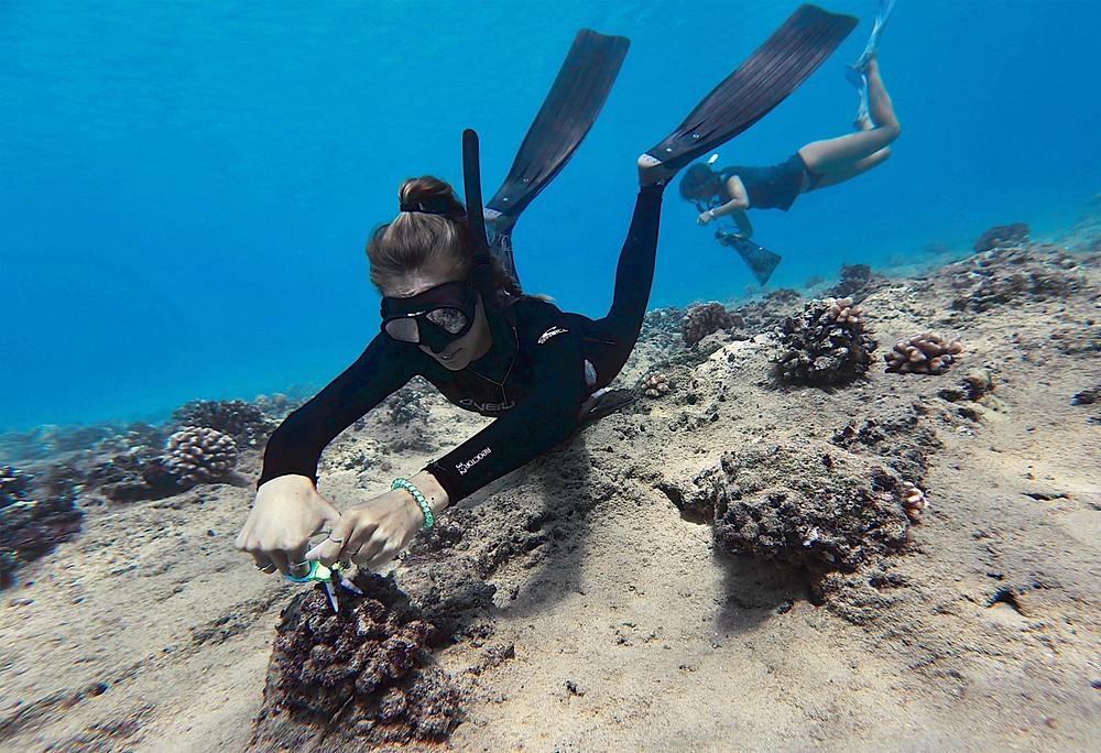 Janelle Van Ruiten and Siena Schaar carefully cut fishing line off of reef